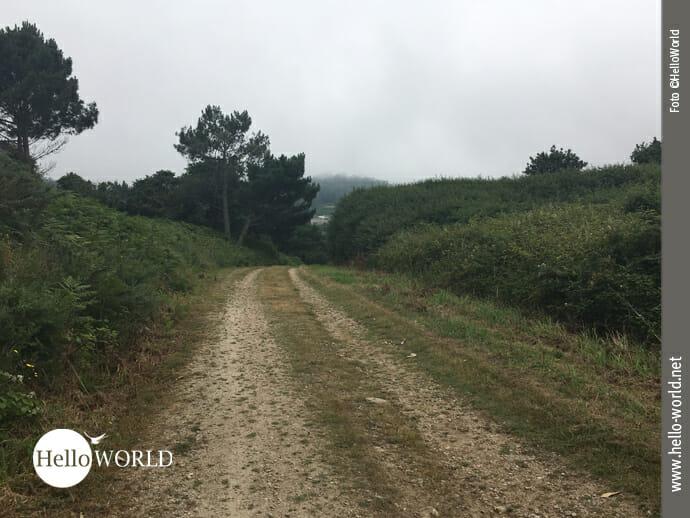 Wandern auf Forstwirtschaftswegen Richtung Caion