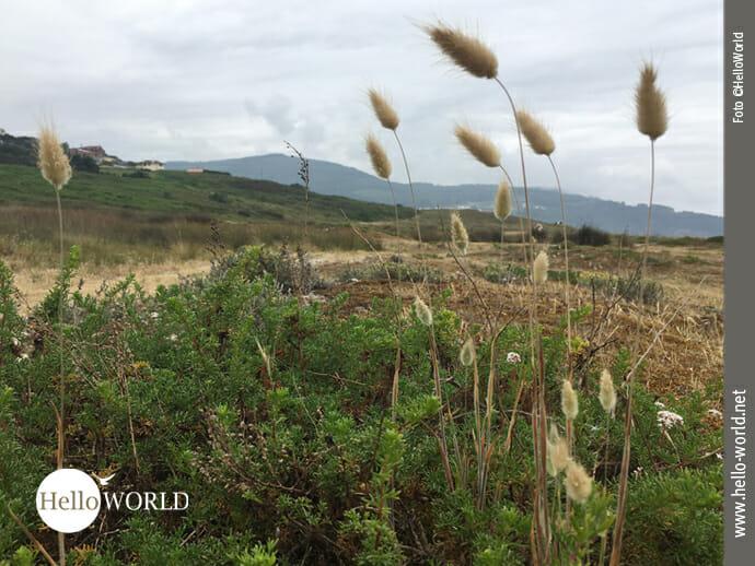 Gräser, Büsche, Sand: die Lagoa de Baldaio