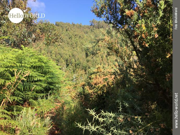 Quer durch die Pampa kurz nach Arnados