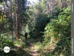 Aufwärts auf schmalen Waldwegen