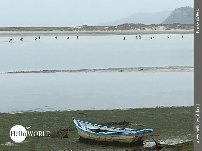Kollektives Shellfish-Sammeln an der Costa da Morte