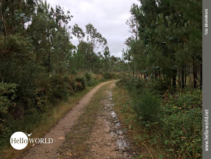 Weg im Landesinneren Richtung Camarinas