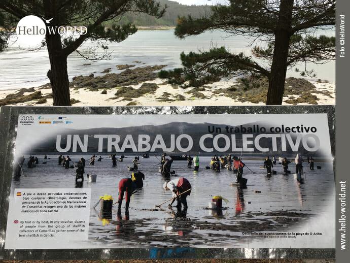 """Das Bild von der sechsten Camino del Norte Etappe zeigt ein Schild mit dem Schriftzug """"un trabajo colectivo""""."""