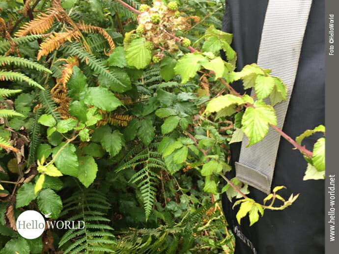 Regenhose: guter Schutz gegen Brombeerhecken
