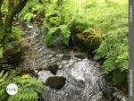 Friedvoll und verträumt: Bachlauf bei Os Muinos