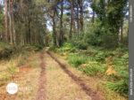 Über den Waldweg bei A Baiuca nach Muxia
