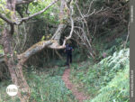 Kleiner Waldpfad auf dem Weg nach Cuno