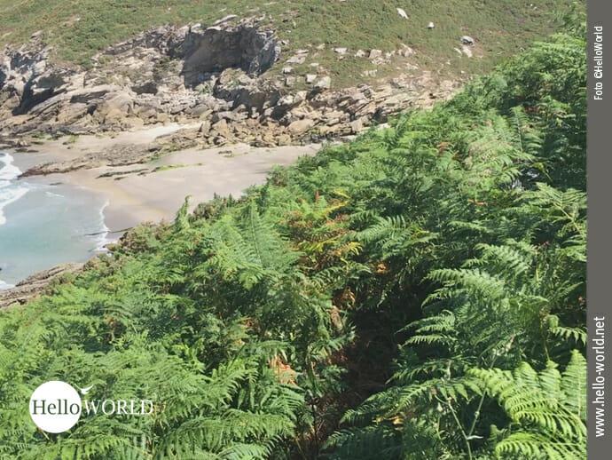 Das Bild von der sechsten Camino del Norte Etappe zeigt einen schmalen Pfad an der Steilküste umrahmt von Farn.