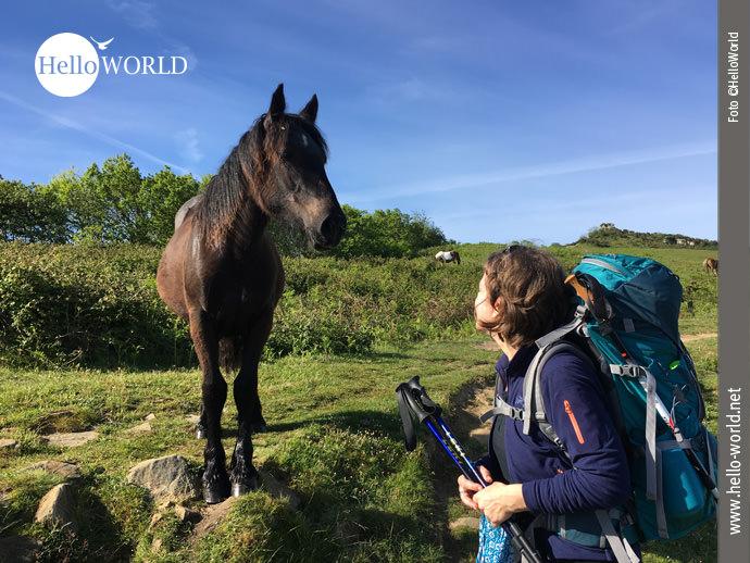 Handzahm: Wildpferd auf dem Jaizkibel