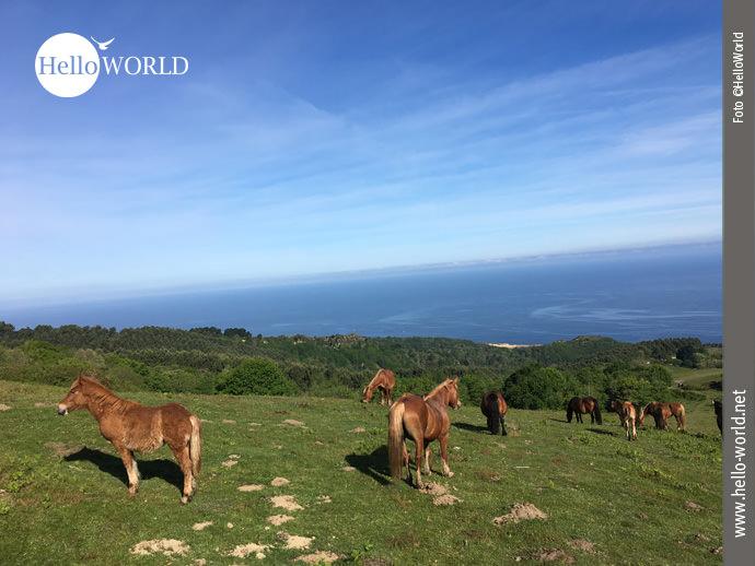 Wunderschön anzusehen: die Herde wilder Pferde