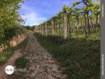 Auf Pflastersteinen entlang spanischer Weinreben