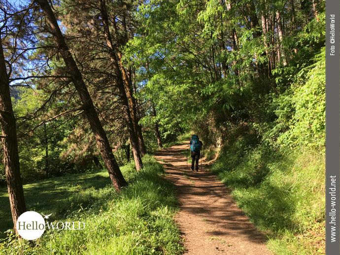 Weich gefedert: der Boden am Waldrand