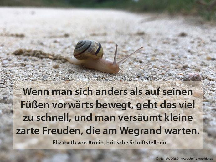 Hier sieht man ein Jakobsweg-Zitat von Elizabeth von Armin mit einem Bild einer Schnecke im Hintergrund.