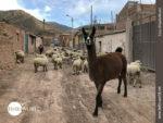 Achtung! Tierischer Straßenverkehr