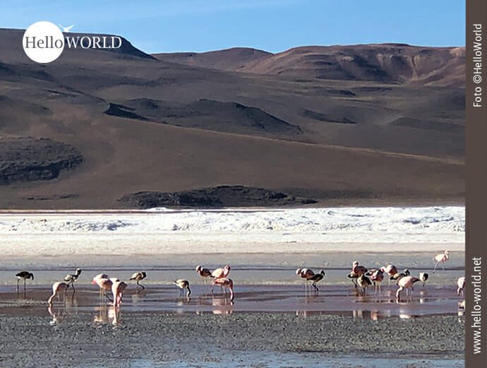 Die Lagunen Boliviens: Paradies für Flamingos