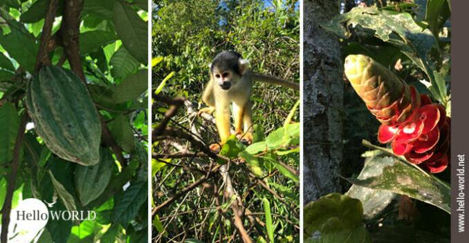Hier sieht man drei ausgewählte Bilder von Tieren und Pflanzen in Südamerika.