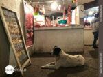 Mercado-Impressionen aus Sicht eines Hundes