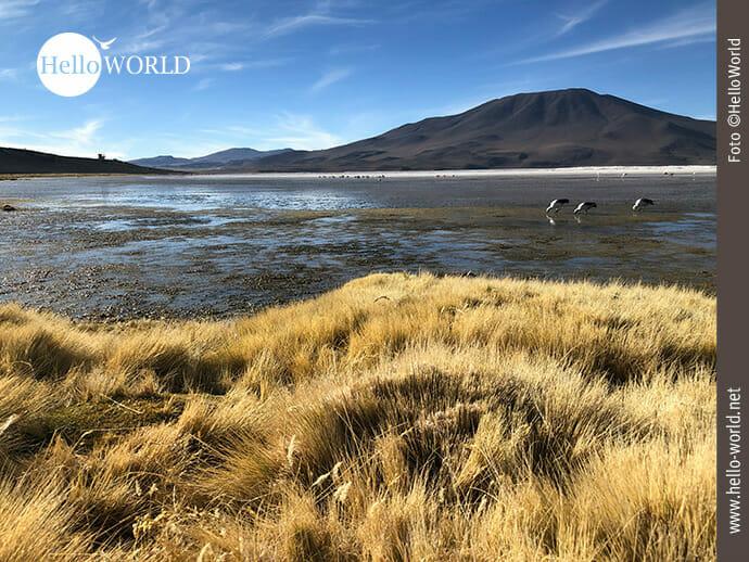 Boliviens Lagunen: Heimat vieler Flamingos