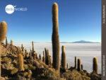 Isla Incahuasi - Kakteeninsel in der Salzwüste