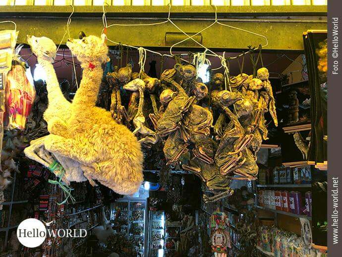 Ungewöhnlicher Anblick: Lamaföten