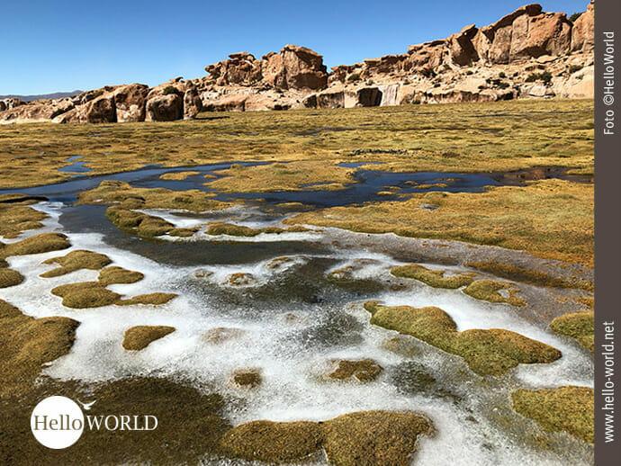 Gefrorenes Rinnsal an der Laguna Negra