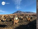Filmreife Kulisse in Bolivien