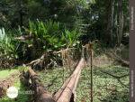Brückenbau im Regenwald