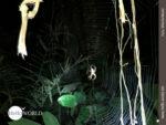 Nachtaufnahme im Dschungel Boliviens