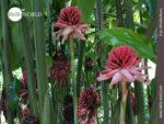 Natürliche Blütenpracht