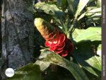 Exotische Blüte im Regenwald