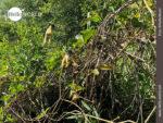 Affenzirkus am Rande der Pampas