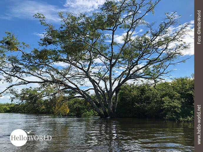 Wasserverwöhnte Fauna in der Pampas Boliviens