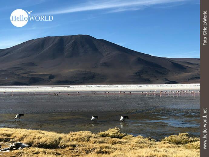 Blick auf die rote Lagune in Bolivien