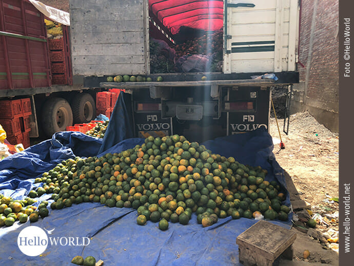 Frisch von der Plantage: Orangen