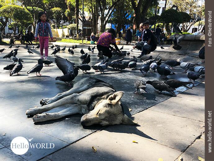 Das Bild aus Sucre, Südamerika zeigt einen Hund auf dem Plaza 25 de Mayo in der Sonne liegend.