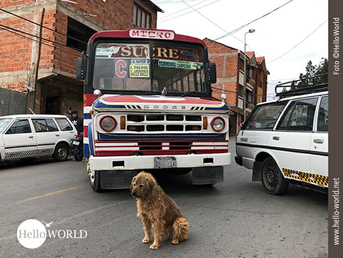 Das Bild, aufgenommen in Sucre, Bolivien, zeigt einen Bus und Fahrzeuge, die die Fahrbahn blockieren. Im Vordergrund sitzt ein Hund.