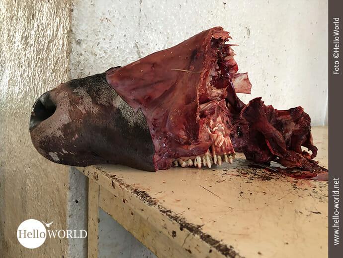 Das Bild aus dem Mercado Central in Sucre, Südamerika, zeigt einen Rinderkopf, der auf einer Fleischtheke liegt.