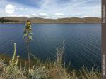 Traumhaft: der Titicacasee auf bolivianischer Seite