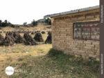 Landleben am Rande des Titicacasees