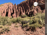 Unauffällig: Lama in der Prärie Boliviens