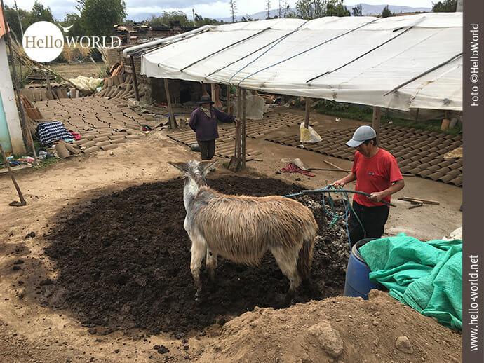 Das Bild aus Ecuador zeigt einen Mann in seinem Hof, einen Esel an der Leine, den er über eine kleine runde mit Erde bedeckter Fläche führt.