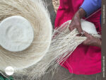 Traditionelles Handwerk: Weben von Panamahüten
