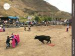 Angriffslustig: Stier beim Kräftemessen in Ecuador