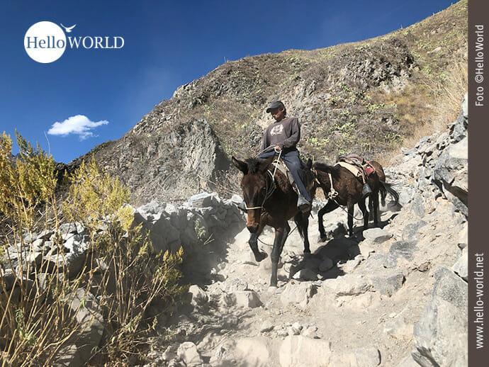 Das Bild aus dem Colca Canyon, Peru, zeigt einen Mann auf einem Pferd, dahinter ein weiteres Pferd, die einen steinigen Weg hinab reiten.