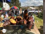 Gut gebraten: Cuy in Peru
