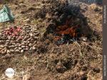 Peruanische Papas in Erdlöchern gekocht