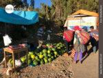 Heute im Angebot: feldfrische Wassermelonen