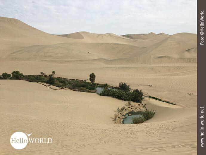 Kleine Oase in der Wüste Perus