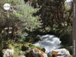 Idyllischer Bachlauf im Nationalpark Huascarán