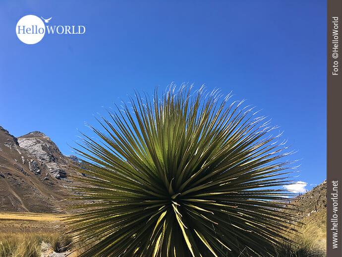 Runde Sache: auffällige Flora im Norden Perus